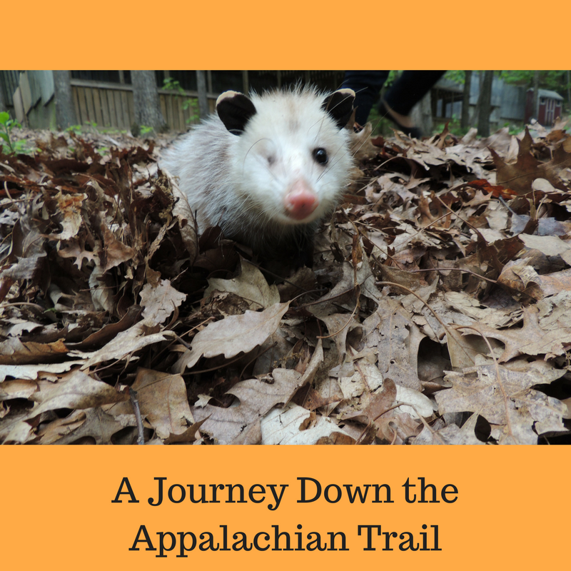A Journey Down the Appalachian Trail